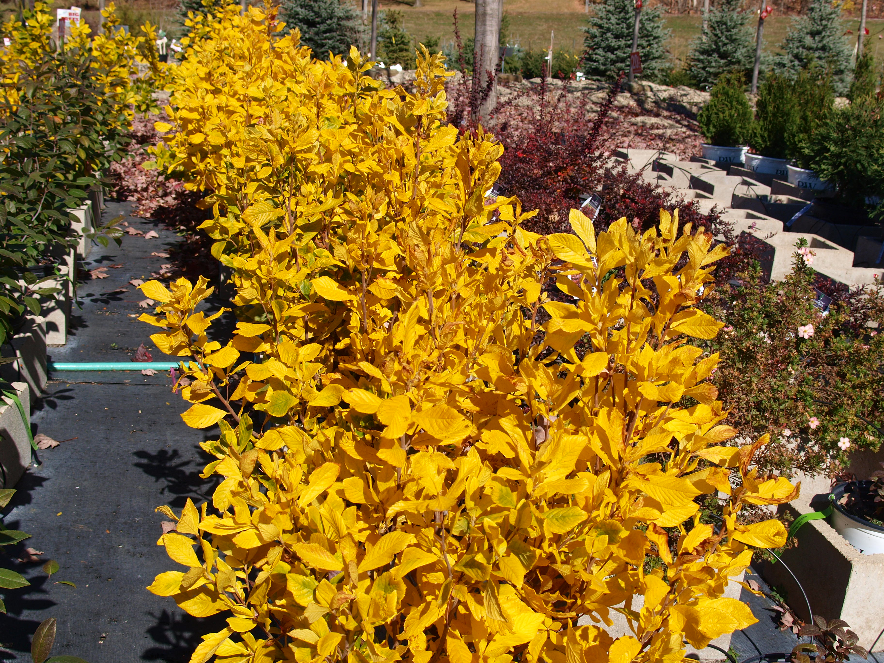 color tree bush - photo #15