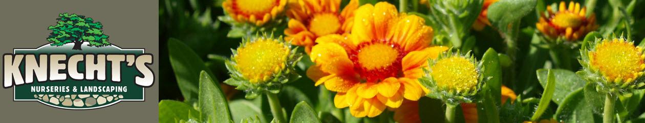 Knecht's Nurseries & Landscaping