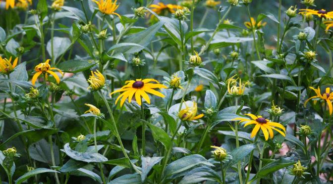 My Woodland Garden – July 28th