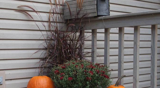 My Woodland Garden – Sept. 23rd