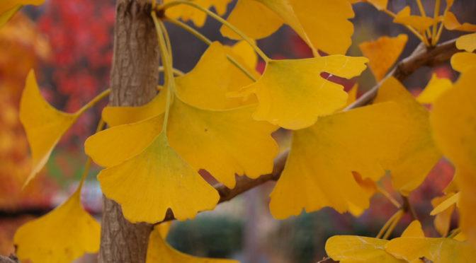Late Season Fall Color